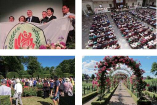 世界バラ会議イメージ