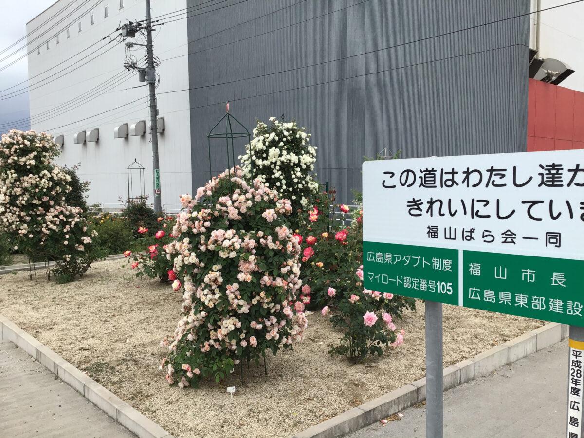 福山ばら会 会長 石井 稔